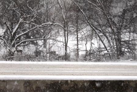 Road Deer.jpg