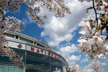 The Cherry Blossoms were close to full bloom at Nationals Park on Wednesday.